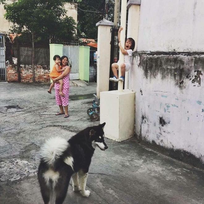 cô bé sợ chó, cô bé trèo lên cột vì sợ chó