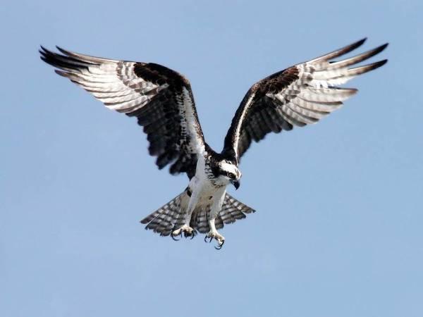Mơ thấy chim ưng đánh số nào? Giải mã điềm báo giấc mộng